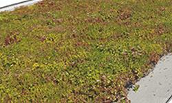 Eco toit